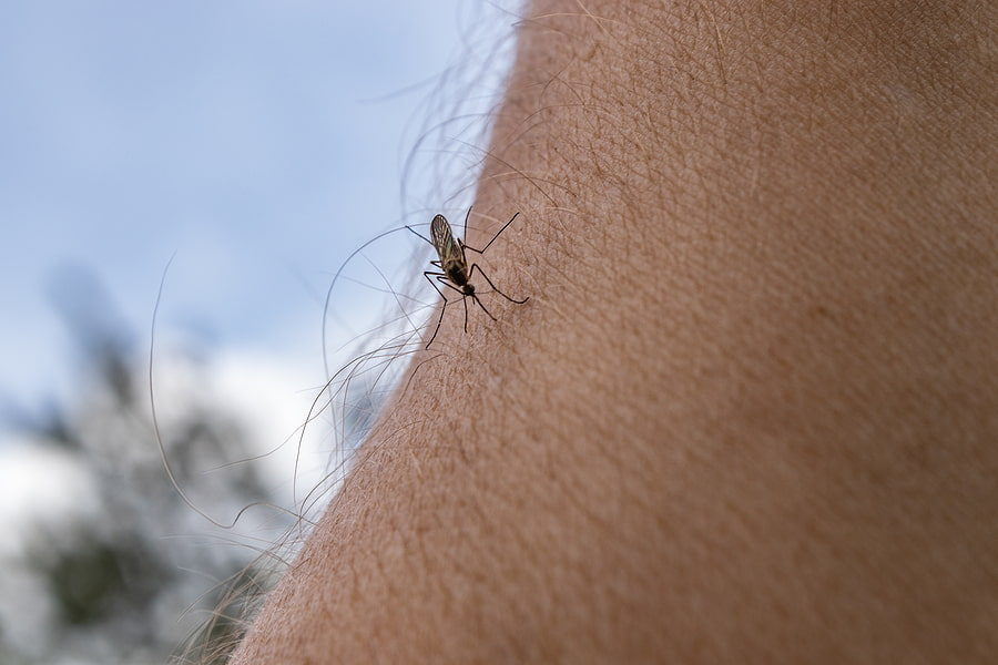 Controlling Mosquitoes