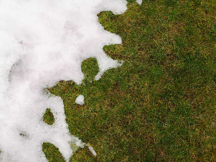 The Winter Kill: How Snow Coverage, Extreme Weather, Mold, and Animals Affect Your Lawn