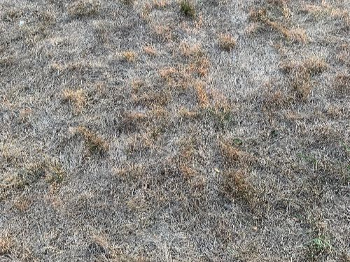 Brown Lawns: What Do I Do Now?
